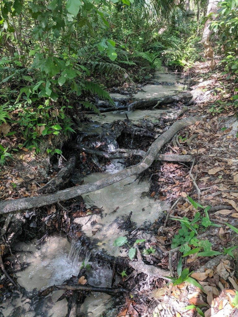 50 Hikes: #5 Hidden Waters Preserve