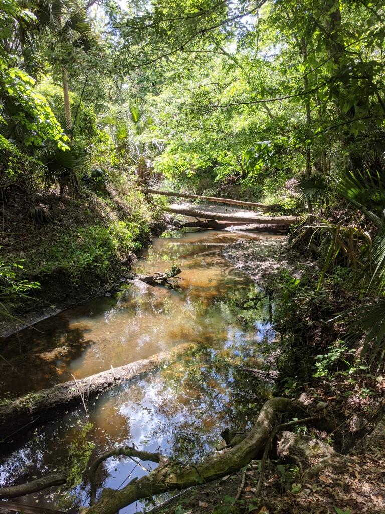50 Hikes: #20 Spring Hammock Preserve