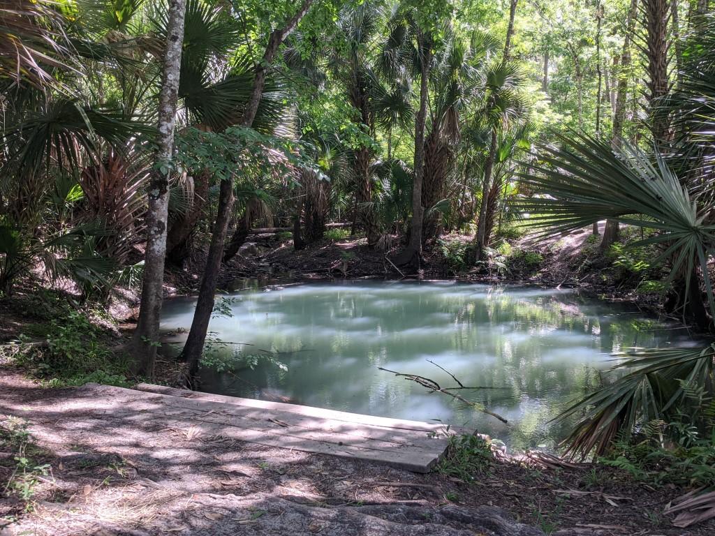 50 Hikes: #20 Spring Hammock Preserve Question Pond